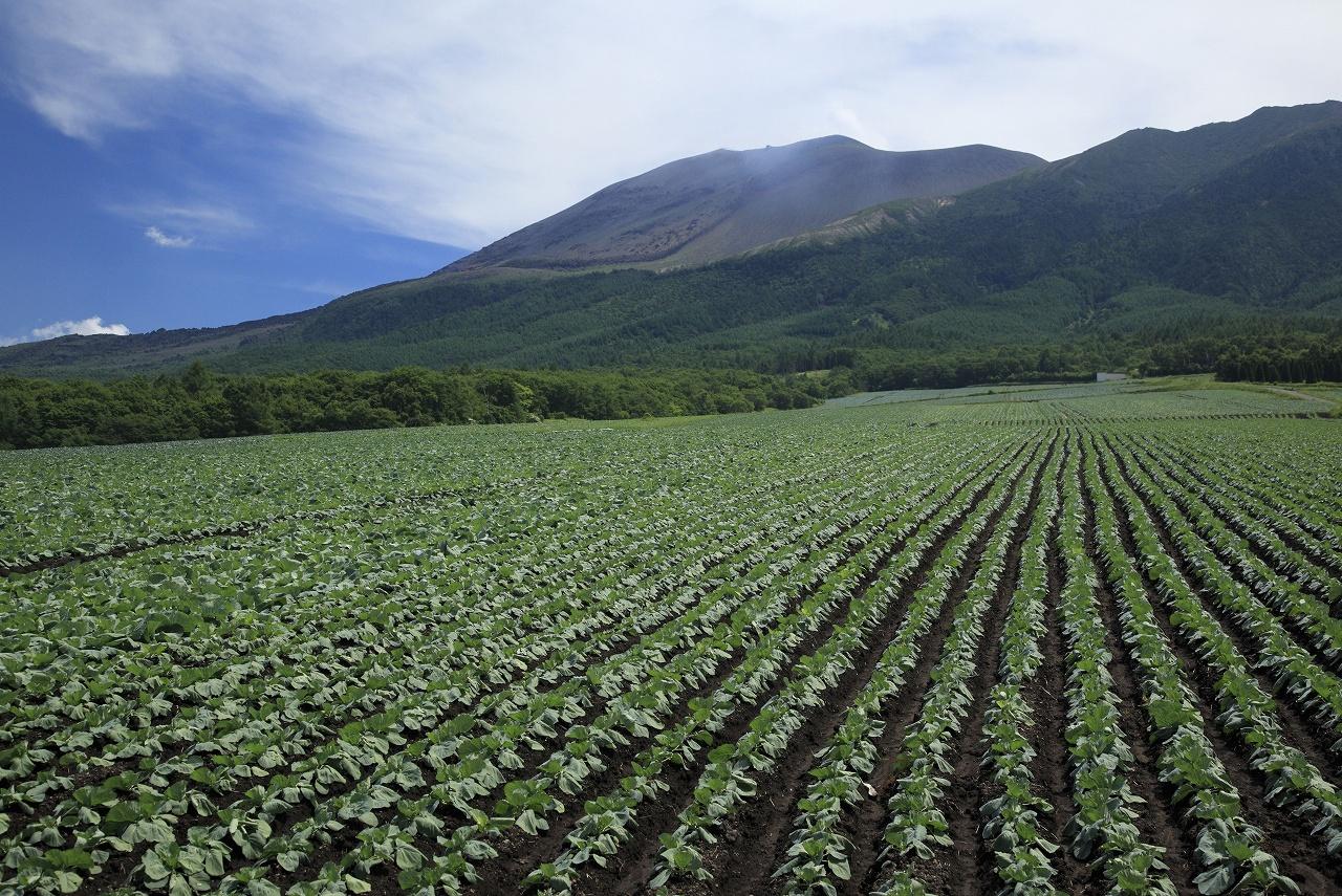 微生物資材で良い土壌環境を