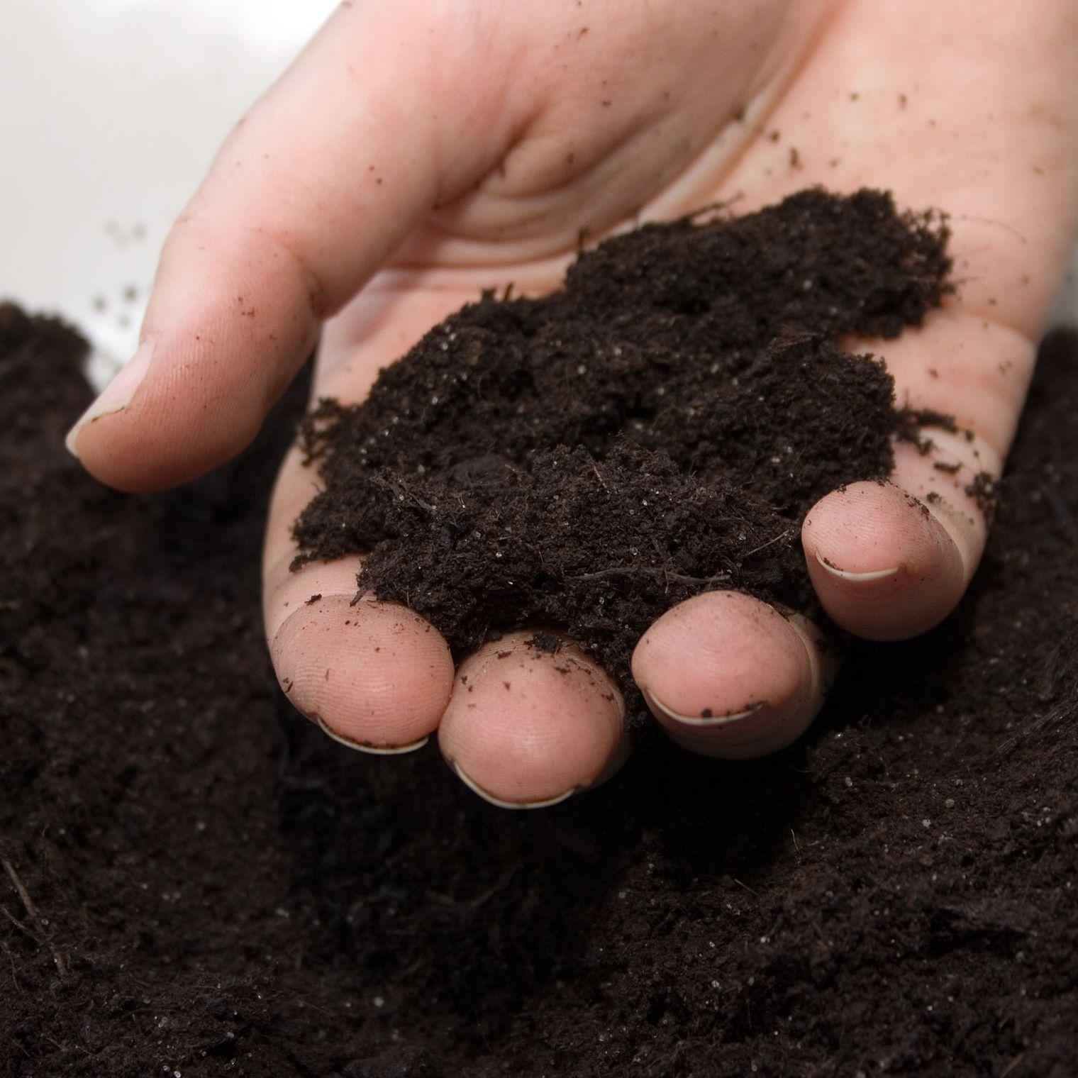 最高級微生物資材で珍しい農作物に挑戦