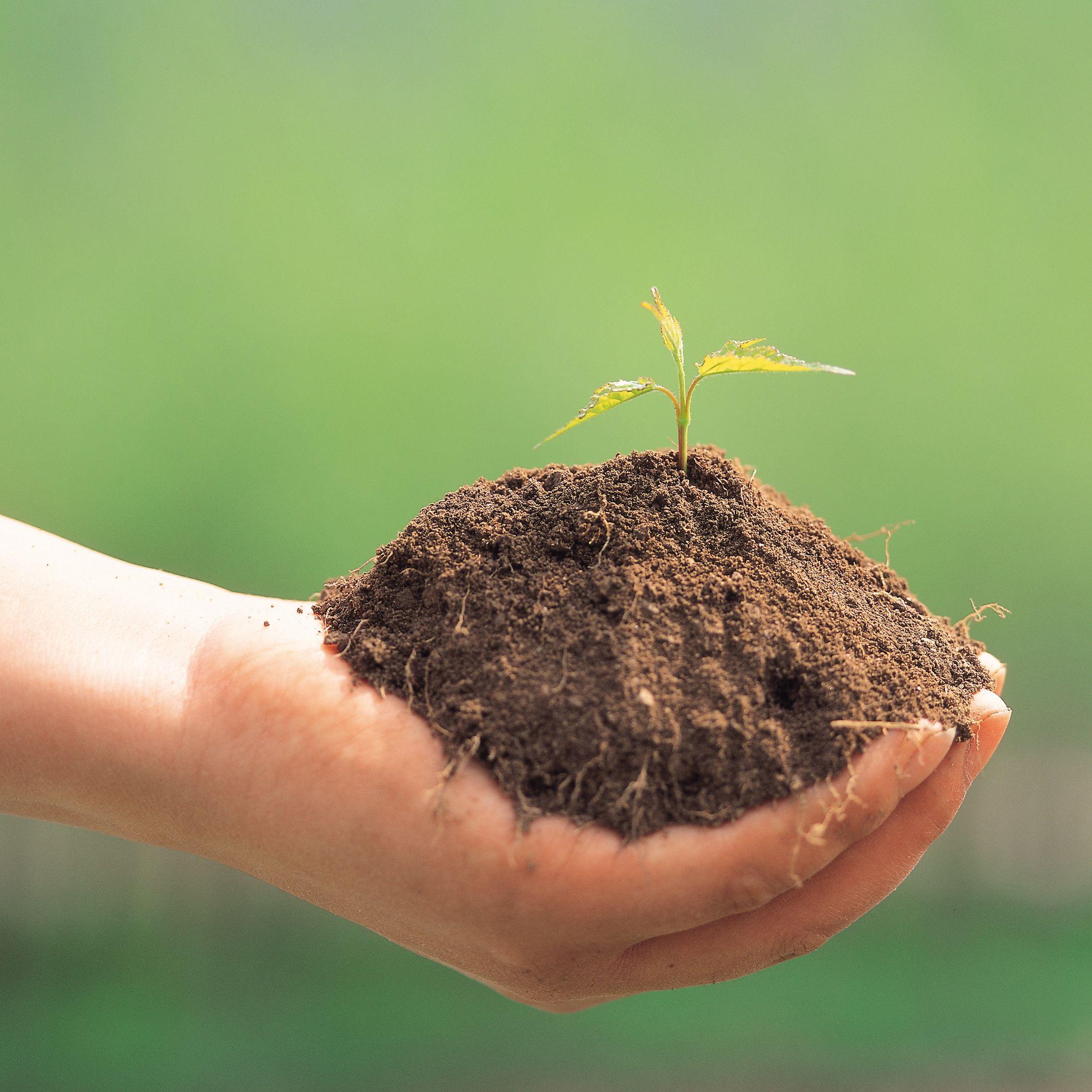 連作障害対策に最適な有機質肥料なら